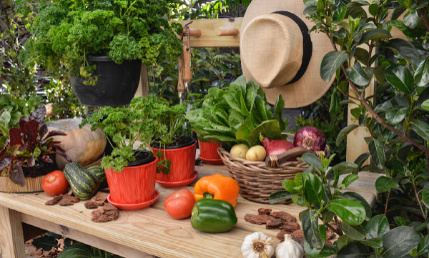 Fruit & Veg Gardening Stand Alone Course