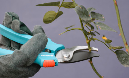 Pruning Stand Alone Course